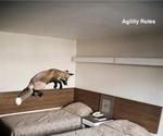 agility_rules.jpg
