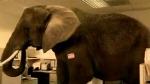 aids_elephant.jpg