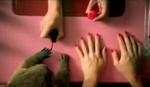 beaver-manicure.jpg