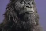 cadbury-gorilla.jpg