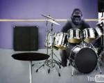 cadbury_gorilla_spoof.jpg