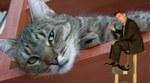cat_boredom.jpg