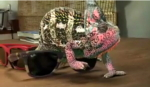 chameleon-wayfarer.jpg