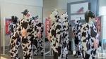 cows_soutwest_airtran.jpg