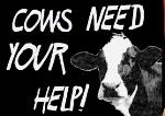 cows_united.jpg