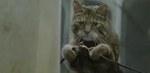 cravendale_catnapped.jpg
