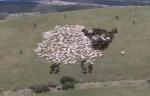 extreme-shepherding.jpg