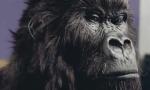 gorilla_cadbury.jpg