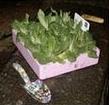 guerrilla-gardening.jpg