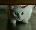 iams-kitty-kitty.jpg