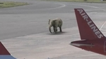 ifaw_elephant_landing.jpg