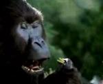 jeep_gorilla.jpg