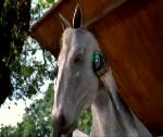 kelloggs_horse.png