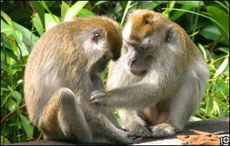 sex monkey tube