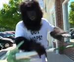 mop-monkey.jpg