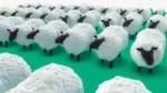msnbc_sheep.jpg