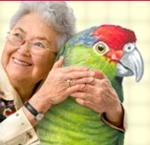 parrot-for-state-bird.jpg