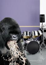 puking-gorilla.jpg