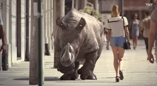 rhino_tnt_1.jpg