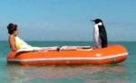 samsung_penguin.jpg