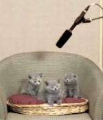 singing-kittens.jpg