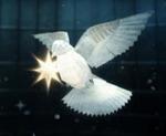 stella-paper-bird.jpg