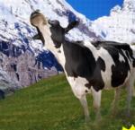 swedish-anna-milk.jpg