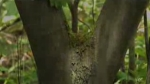 tree_porn.jpg
