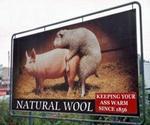 wool_ass.jpg