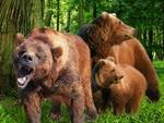 yawning-bear.jpg